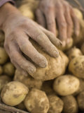 Farmer Harvesting Potatoes Photographic Print by Jim Richardson