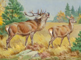 This Painting Depicts Two European Red Deer in a Forest Photographic Print by Walter Weber