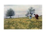 Two Women Pick Wild Mustard Blossoms Where Battle Was Fought Photographic Print by Clifton R. Adams