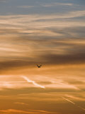 Silhouetted Pelican Flies Toward Sunset Photographic Print by James Forte