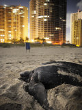 Endangered Sea Turtle Struggles Ashore on Juno Beach Photographic Print by Jim Richardson
