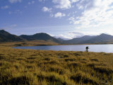 Hiker Runs Through Alpine Tundra Beside an Unnamed Lake Photographic Print by Gordon Wiltsie