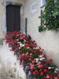 Pink, Red, and White Flowers Planted Down the Staircase Photographic Print by  Keenpress