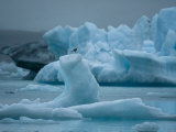 Gull Perched Atop of Ice in the Water at the Vatnajokull Icefield Photographic Print by Mattias Klum