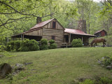 Horse Grazing in the Yard of a Mountain Log Cabin Photographic Print by Greg Dale