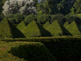 Geometrically Trimmed Shrubs in a Botanical Garden Photographic Print by Mattias Klum