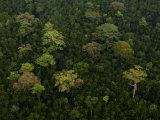 Riverine Forest Area North of Kuching Fotografisk tryk af Mattias Klum