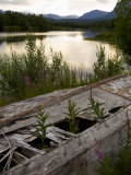 Old Boat Overgrown with Wildflowers and Weeds on a Lake Shore Photographic Print by Mattias Klum