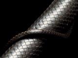 Eastern Indigo Snake Photographic Print by Joel Sartore