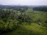 Hut in Secondary Rain Forest Growth North of Kuching Photographic Print by Mattias Klum