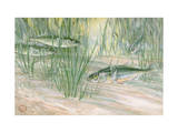 Painting of Male Three-Spined Stickleback Guarding His Nest of Eggs Photographic Print by Hashime Murayama