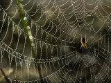 Orb-Weaving Spider in the Center of it&#39;s Web Photographic Print by Mattias Klum