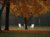 Three Welcoming Rocking Chairs under an Autumn-Hued Maple Tree Fotografisk tryk af Paul Chesley