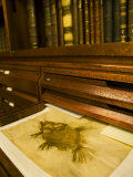 Books and Fish Print in the Library of Carl Linnaeus Photographic Print by Mattias Klum