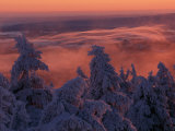 Snow-Draped Trees and Distant Mountain Ridges at Twilight Photographic Print by Norbert Rosing