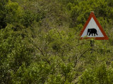 Sign Warning of an Elephant Crossing Area Photographic Print by Mattias Klum