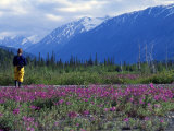 Hiker Exploring Meadow of Wildflowers Photographic Print by Kate Thompson