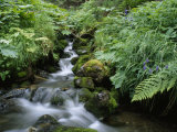 Clean Water Creek Flowing Through Forest Greenery Photographic Print by Rich Reid