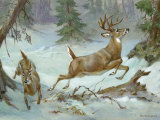 White Tail Buck and Doe Flee from Pursuing Wolves Photographic Print by Walter Weber