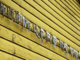 Fish Hung Out to Dry Along Yellow Structure Photographic Print by  Keenpress