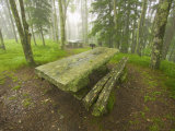 Picnic Tables at the Balsam Mountain Picnic Area Photographic Print by Michael Melford