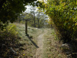 Marker Post Beside the Appalachian Trail Framed by Foliage Photographic Print by Scott Sroka