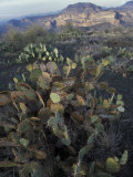 Cactus in the Superstition Mountains of Central Arizona Photographic Print by Scott Warren