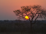 Sunset over a Mopani Forest in Kruger National Park Photographic Print by Paul Sutherland