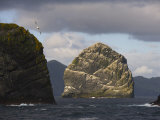 Gannet Bird Colonies on St. Kilda Islands, Outer Hebrides Photographic Print by  Keenpress