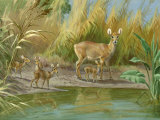 This Painting Depicts a Chinese Water Deer with Four Fawns Photographic Print by Walter Weber