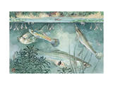 Guppies and Minnows are Good Fish to Have for Mosquito Control Photographic Print by Hashime Murayama