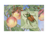 Painting of Japanese Beetles Photographic Print by Hashime Murayama