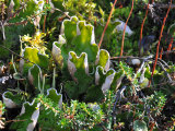 Ground Cover of Lichens and Other Small Plants Photographic Print by George Herben