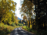 Gravel Road Lined with Trees and Forest, with Mountain in Distance Photographic Print by George Herben