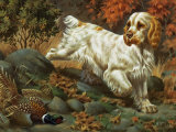 Portrait of a Clumber Spaniel Hunting a Bird Photographic Print by Walter Weber