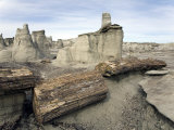 Petrified Tree in the Bisti Badlands Wilderness Photographic Print by Scott Warren