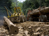 Legal Logging in the Danum Valley Conservation Area Photographic Print by Mattias Klum