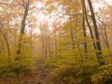 Beautiful Fall Scene in Acadia National Park Fotografisk trykk av Michael Melford