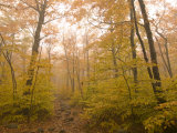 Beautiful Fall Scene in Acadia National Park Impressão fotográfica por Michael Melford