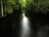 Water Channel in Sweetwater Strand in Big Cypress National Preserve, Photographic Print