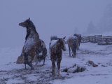 Horses in a Fenced Field on a Snowy Evening Photographic Print by William Allen