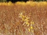 Native Grasses Display Autumn Colors Fotografisk tryk af Charles Kogod