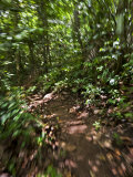 Blurred Motion Shot Going Down a Rain Forest Path Photographic Print by Mattias Klum