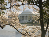 Thomas Jefferson Memorial Surrounded by Cherry Blossoms Photographic Print by Hannele Lahti