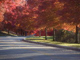 Tree Lined Street on an Autumn Day Photographic Print by Taylor S. Kennedy