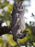 Eagle Owl in Samburu National Park Photographic Print by Michael Nichols