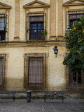 Dog on a Bench Outside a Building in Cordoba Photographic Print by Scott Warren