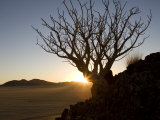 Backlit Tree on a Hill Above the Desert at Sunset Photographic Print by Michael Polzia