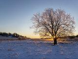 Sunlight Through Leafless Tree Branches in a Snowy Landscape Fotografisk tryk af Mattias Klum
