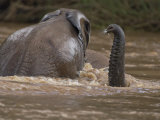 Young Elephants Playing in a River in Samburu National Park Photographic Print by Michael Nichols